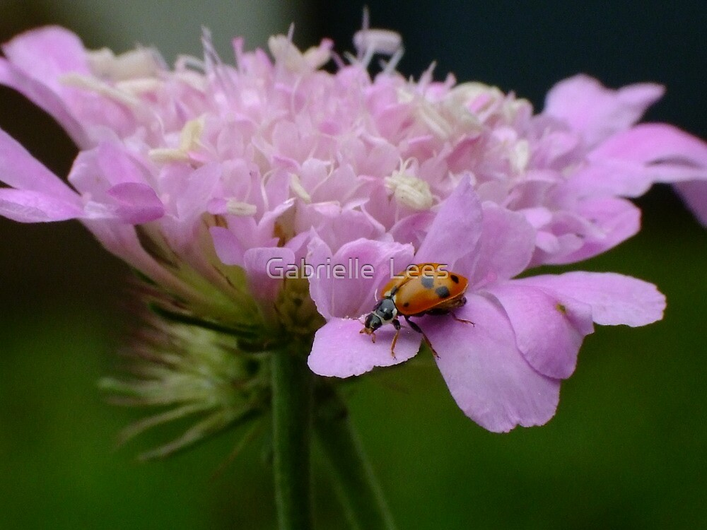 Pretty Ladybird by Gabrielle  Lees