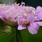 Pretty Ladybird by Gabrielle  Lees