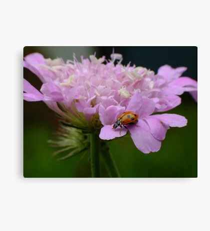 Pretty Ladybird Canvas Print