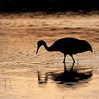 Sandhill Crane Sunset Reflection by rjcolby