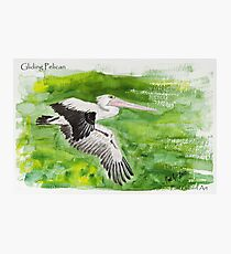 Gliding Pelican Photographic Print