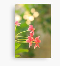 Magical Afternoon  Canvas Print