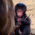 Baby Gelada Baboon by Stuart Robertson Reynolds