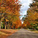 Country Sideroad by Nancy Barrett