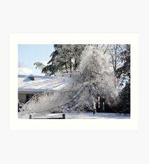 Bright sunny snow covered trees Art Print