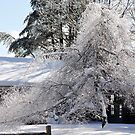 Bright sunny snow covered trees by Penny Fawver