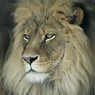 Lion's face by Penny Fawver