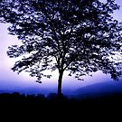TREES PHOTOGRAPHED BY DANIEL SORINE by Daniel Sorine
