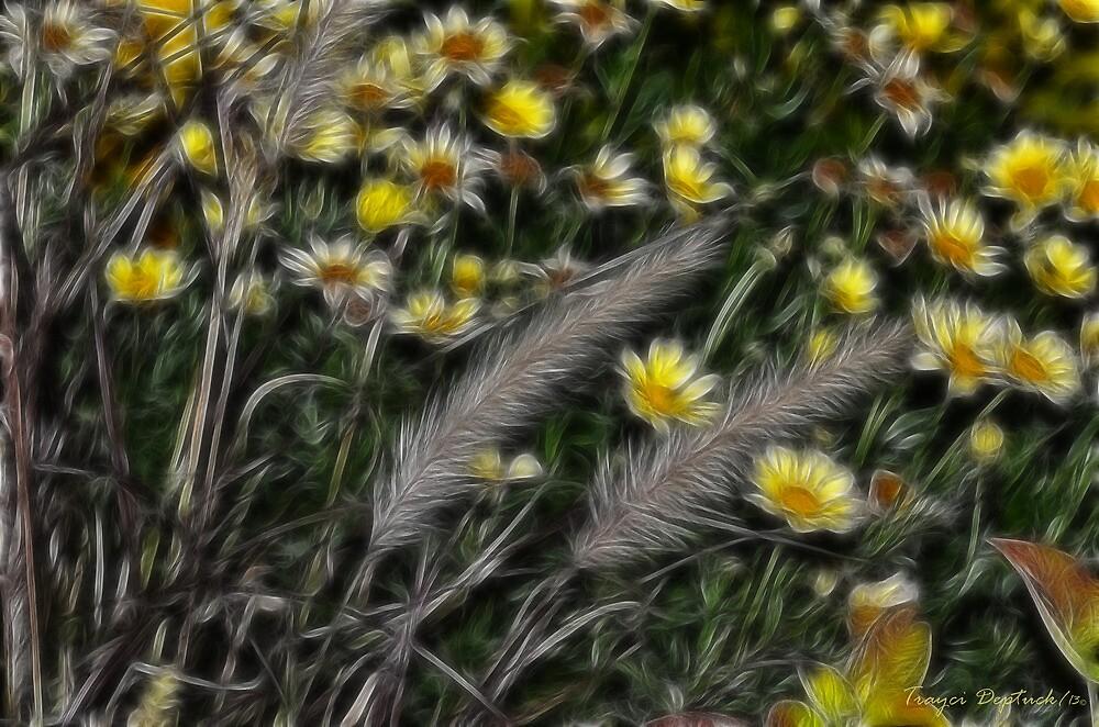 Daisy Fields by Creative Captures