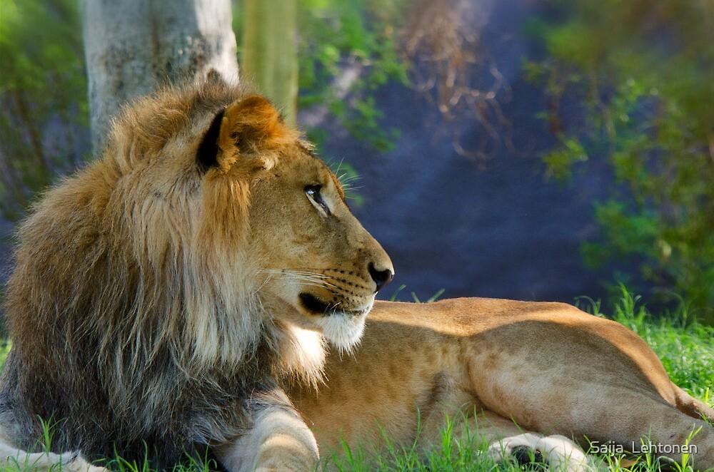 The Lion King  by Saija  Lehtonen