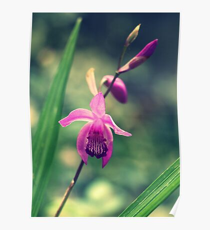 Purple Frilly Orchid Poster