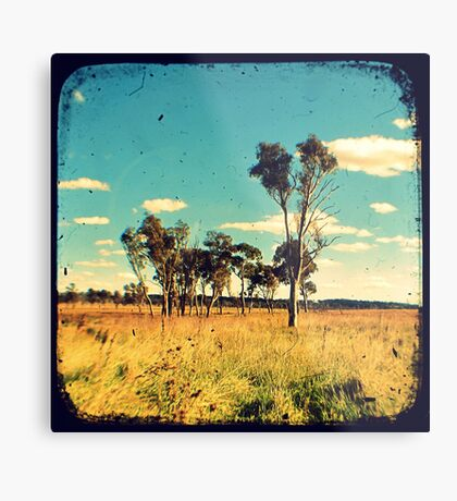 Eucalyptus Trees Through The Viewfinder (TTV) Metal Print