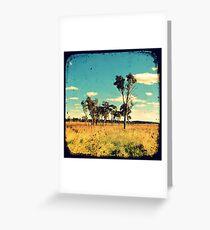 Eucalyptus Trees Through The Viewfinder (TTV) Greeting Card
