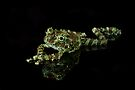 Vietnamese Mossy Frog by Val Saxby