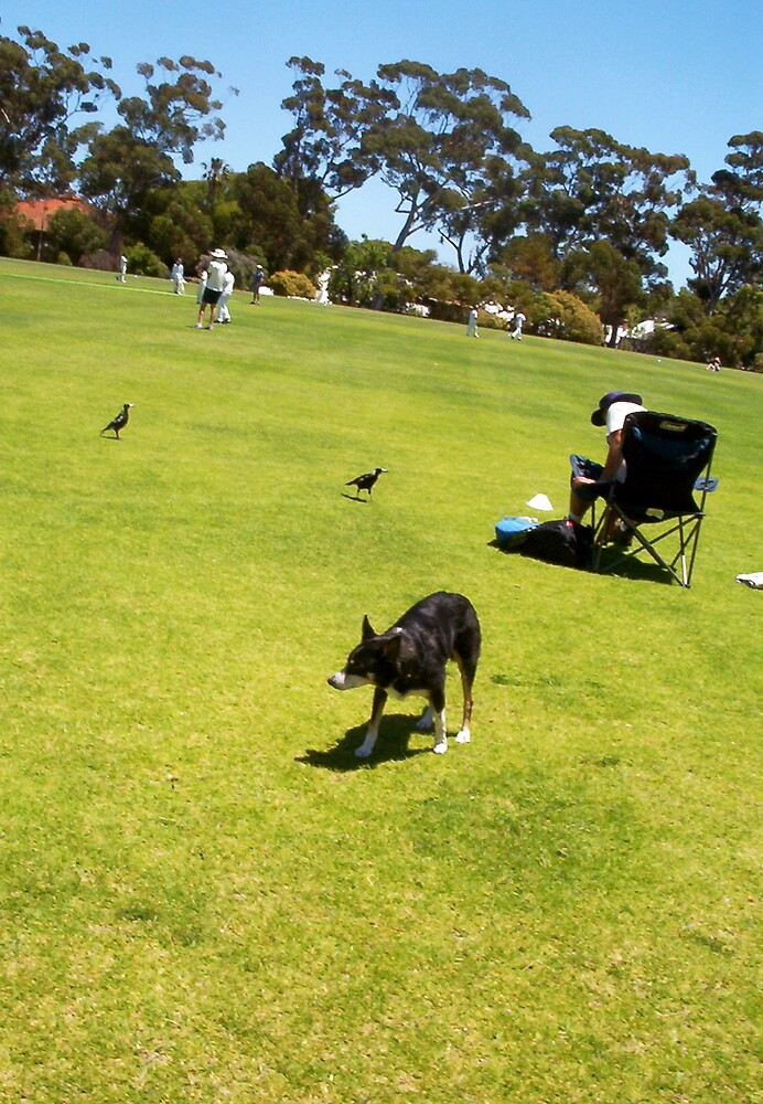 The Continuing Standoff Between Magpies And Jesse by Robert Phillips