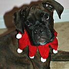 Happy Howlidays by Jeanette Muhr