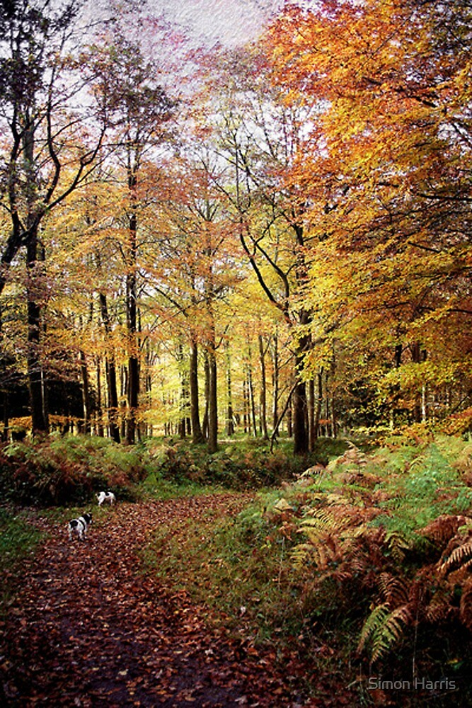 Autumn Woodland Walk by Simon Harris
