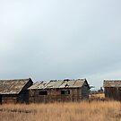 Old Log house and sheds by BCkat