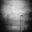 Black dove by andaluzina