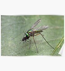 Long Legged Fly. Poster