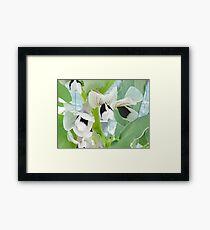 The Remarkable Flowers of the Fava Bean  Framed Print