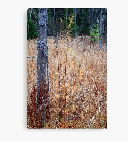 It's Starting to Feel Very Squatchy in these Woods Canvas Print
