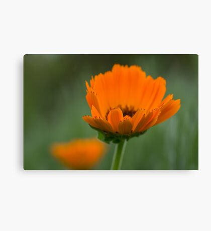 Orange & Green Canvas Print