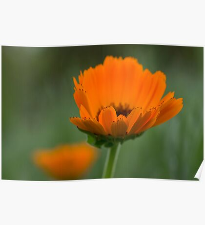 Orange & Green Poster