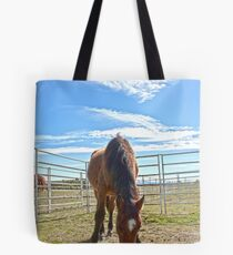 Hungry brumby Tote Bag