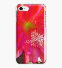 Pink Cactus Flower iPhone Case/Skin
