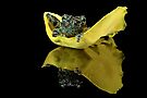 Vietnamese Mossy Frog (2) by Val Saxby