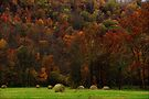 Autumn Harvest  by NatureGreeting Cards ©ccwri