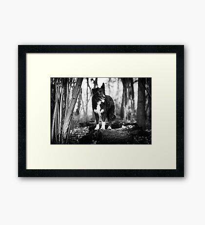 Forest Dog Framed Print