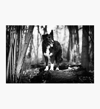 Forest Dog Photographic Print