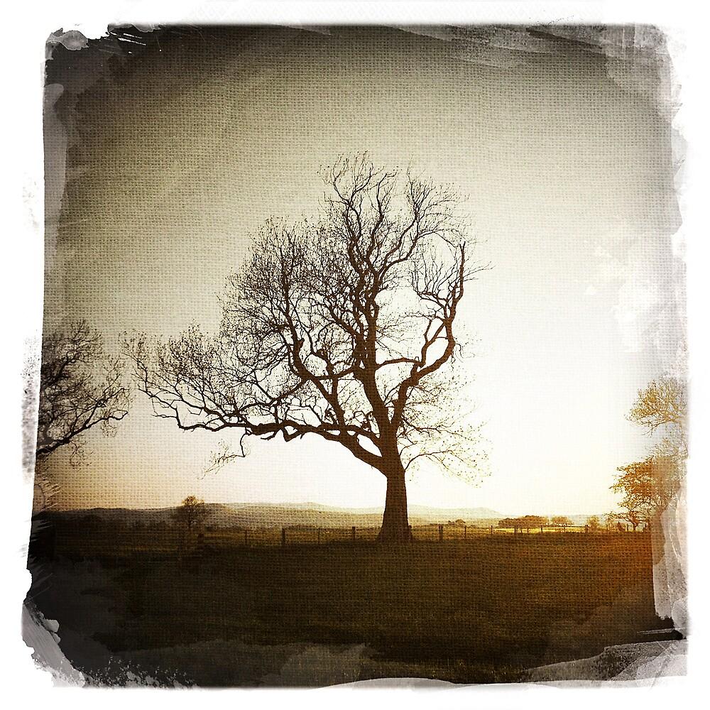 Lone Tree by SerendipityArt