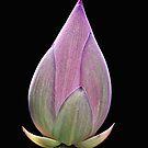 Flower by Jaydew70