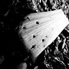 Black and White Driftwood by marting04
