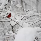 Cardinal blending in by CAPhotography