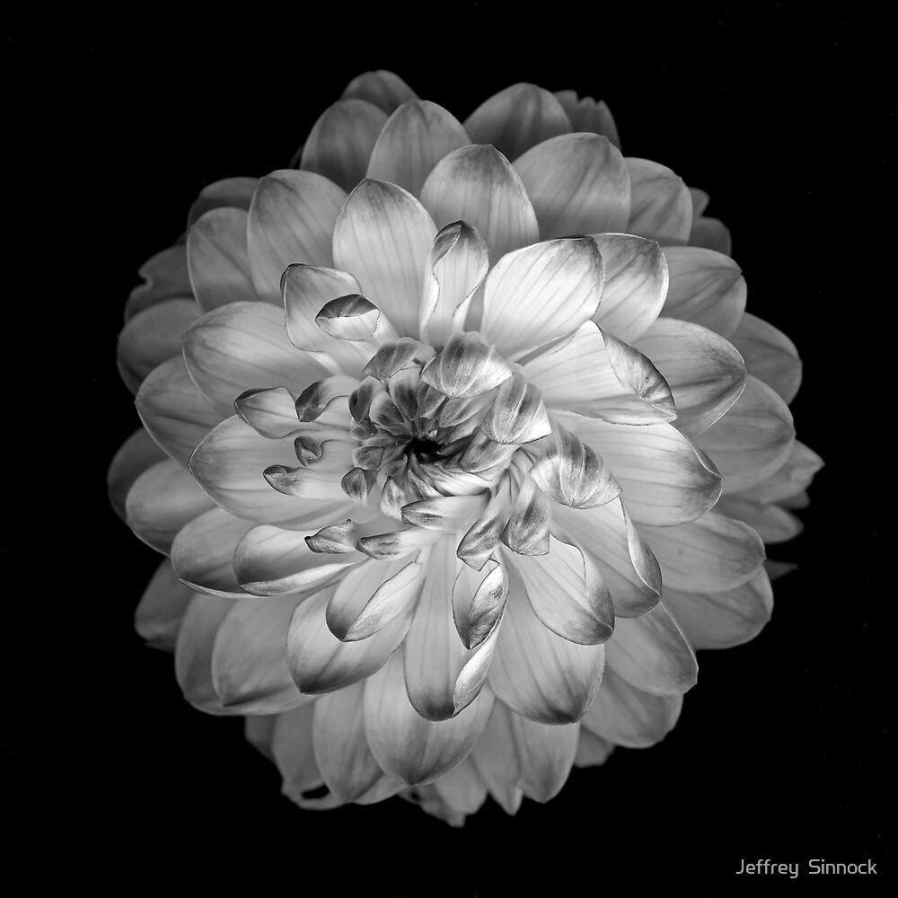 Dahlia by Jeffrey  Sinnock