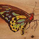 PYROGRAPHY: Richmond Birdwing Butterfly by aussiebushstick