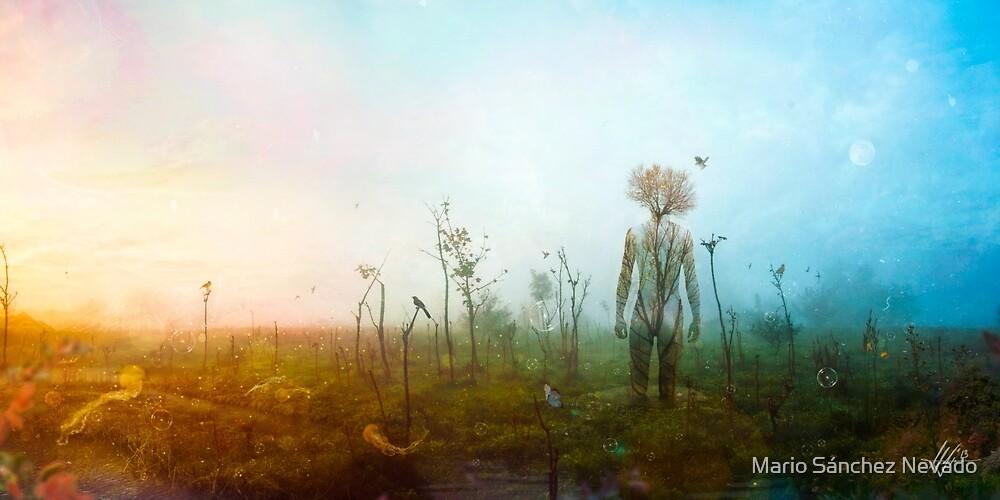 Internal Landscapes by Mario Sánchez Nevado