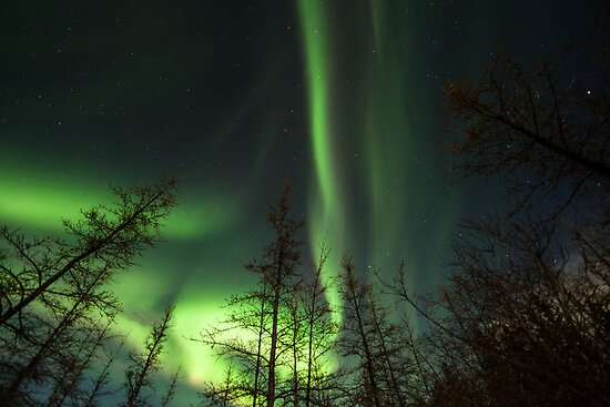 Yukon Northern Lights 1 by Phil Hart