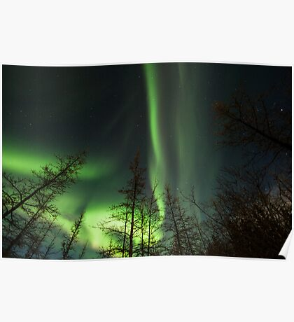 Yukon Northern Lights 1 Poster