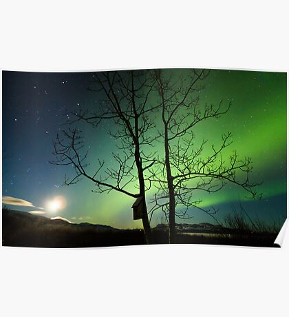 Yukon Northern Lights 2 Poster