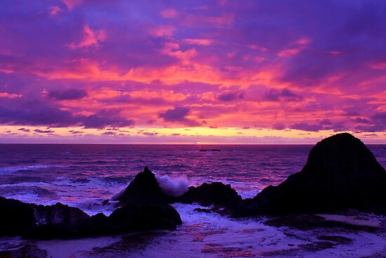 Pink Sunset on the Oregon Coast by Daniel Brown