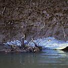 Costa Rica - Crocodile by mattnnat