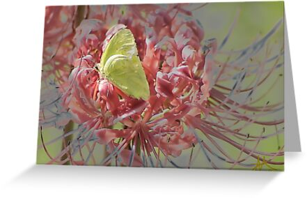 Hello Spring by Pat Moore