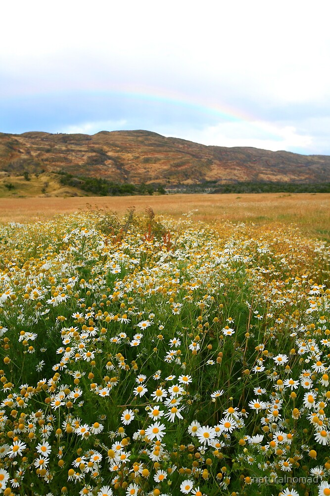 Wildflowers and Rainbow by naturalnomad
