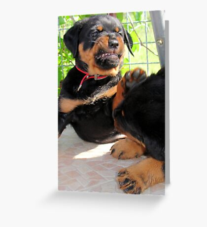 Grumpy Faced Rottweiler Puppy Lashes Out Greeting Card