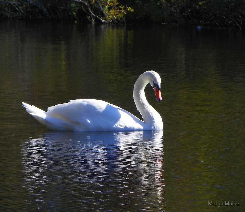 Mute Swan Reflection by MaryinMaine